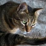 Кварталните котки