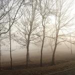 Великата януарска мъгла