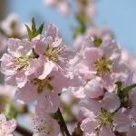 Пролет '09