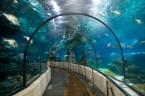 L'Aquarium de Barcelona